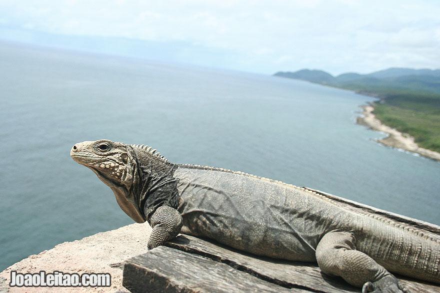 North America Best Destinations - North America Travel Guide - photo of Iguana in San Pedro de la Roca Fortress Cuba