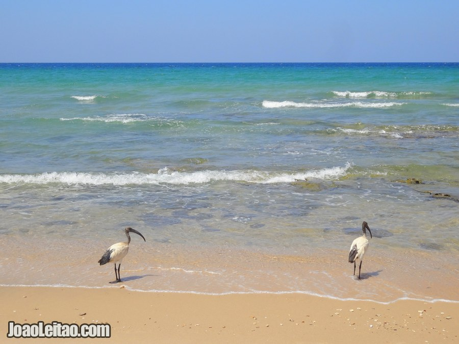 Baathela Beach in Berbera Somaliland