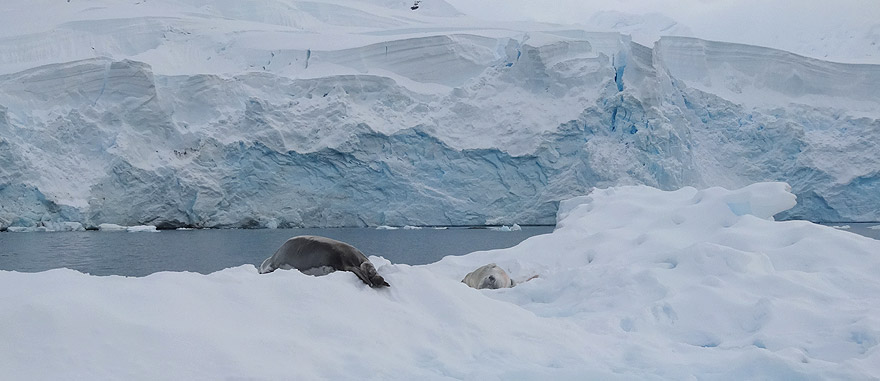Visit Paradise Bay - Antarctica Travel Guide