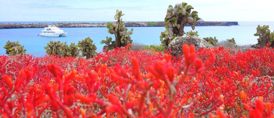 Cruzeiros de última hora às Galápagos – foto da Ilha Plaza Sul no arquipélago dos Galápagos