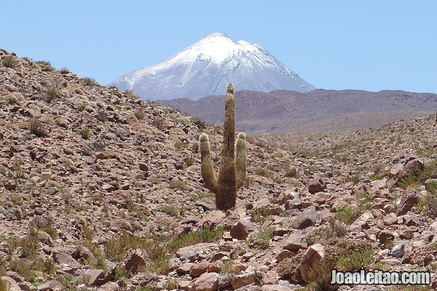 Volcano and Cactus, Inspiring Photos of Atacama Desert