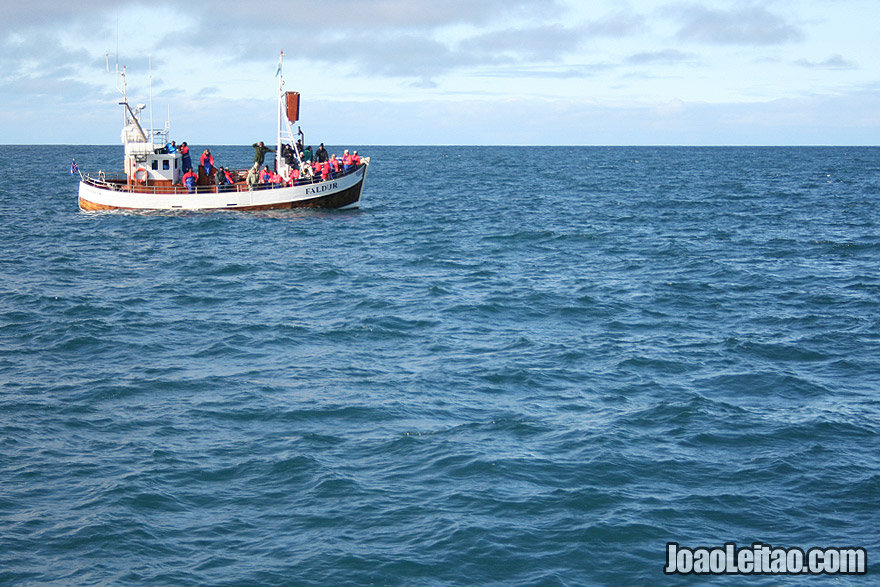 Whale Watching Husavik Iceland