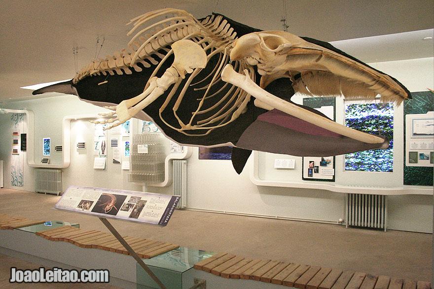 Visit Husavik Whale Museum Northeastern Region Iceland