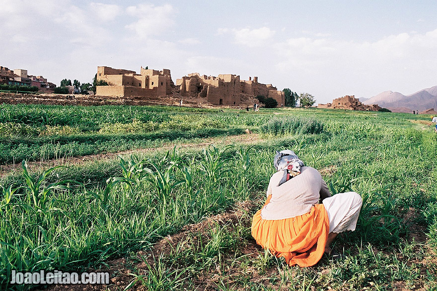 Photo of girl working on the fields of Tamtettoucht in the Atlas Mountains, Morocco