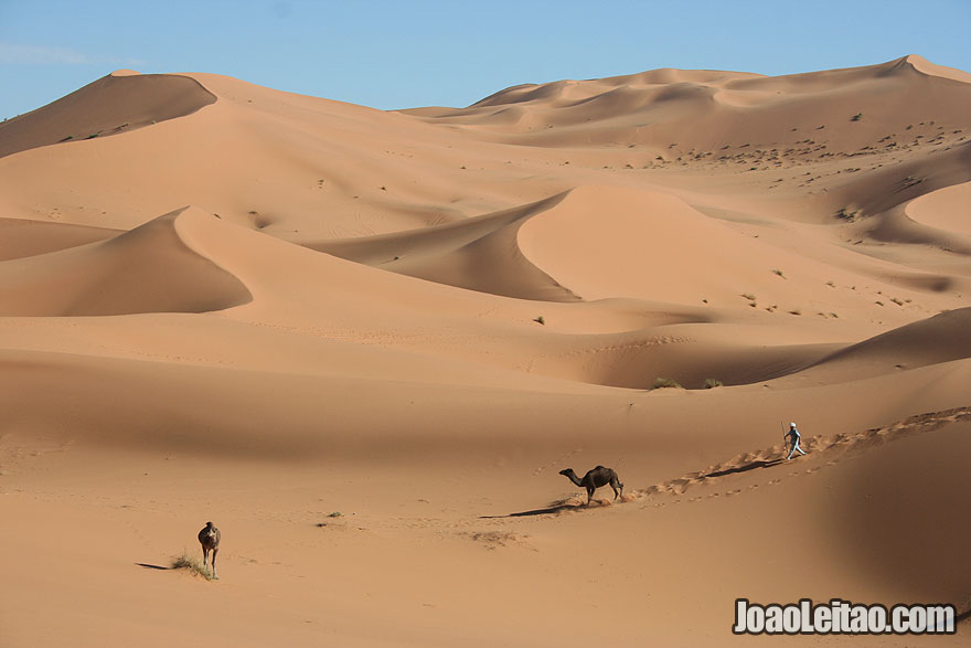 Nomad and camels in Erg Chebbi Dunes