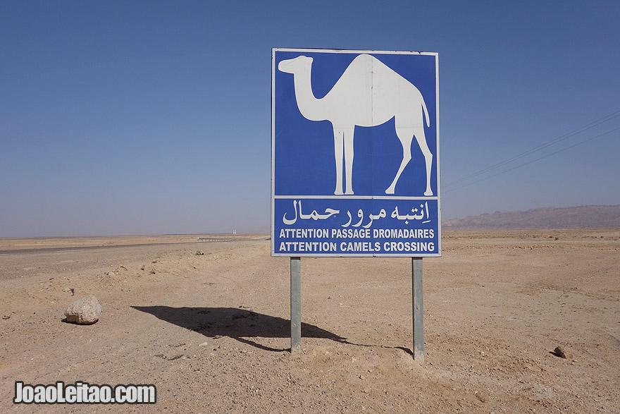 Camel road sign in Tunisia