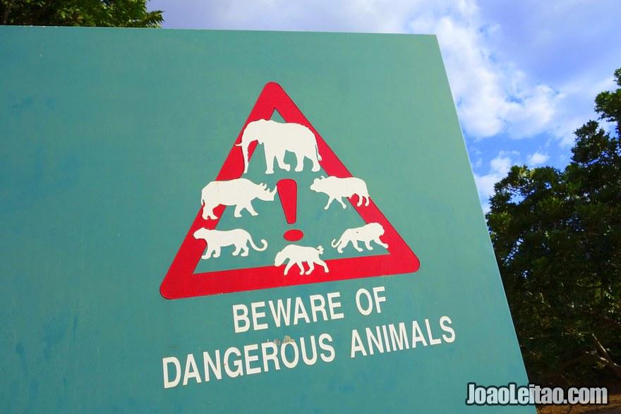 Placa de estrada para fazer atenção aos animais selvagens