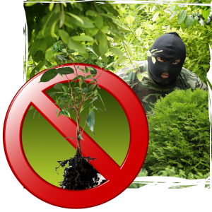 Plant theft is a growing trend  Earnshaws