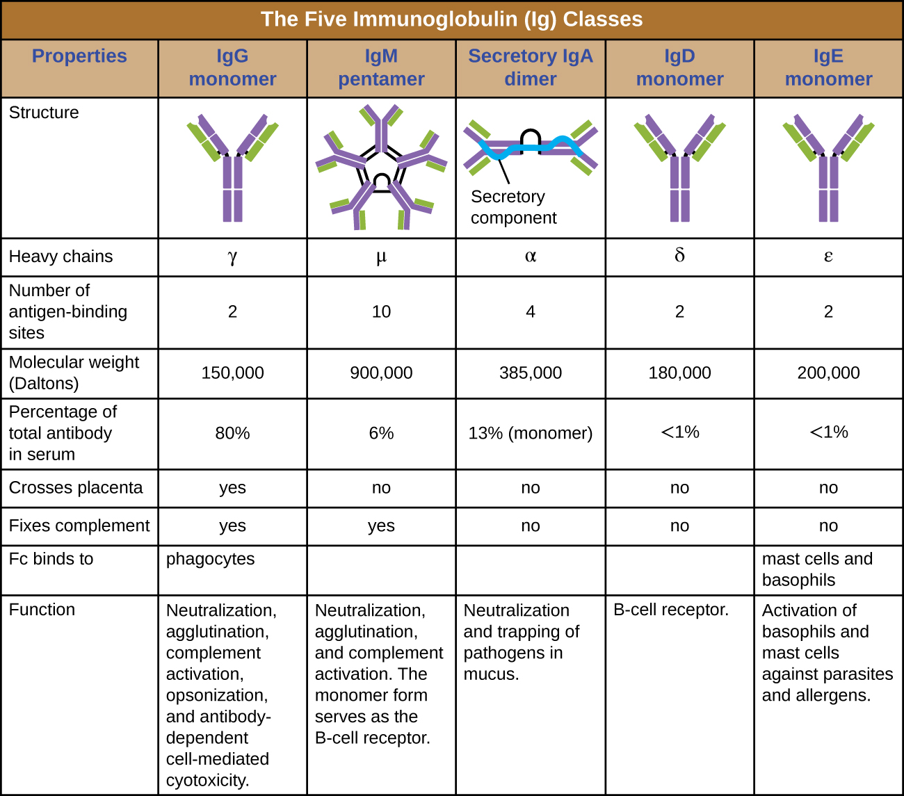 Matching Overview Of Specific Adaptive Immunity By