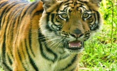 Volunteering with wild animals in Thailand