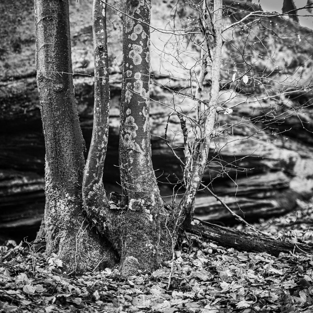 Dreierlei Quadrate aus dem Pfälzer Wald
