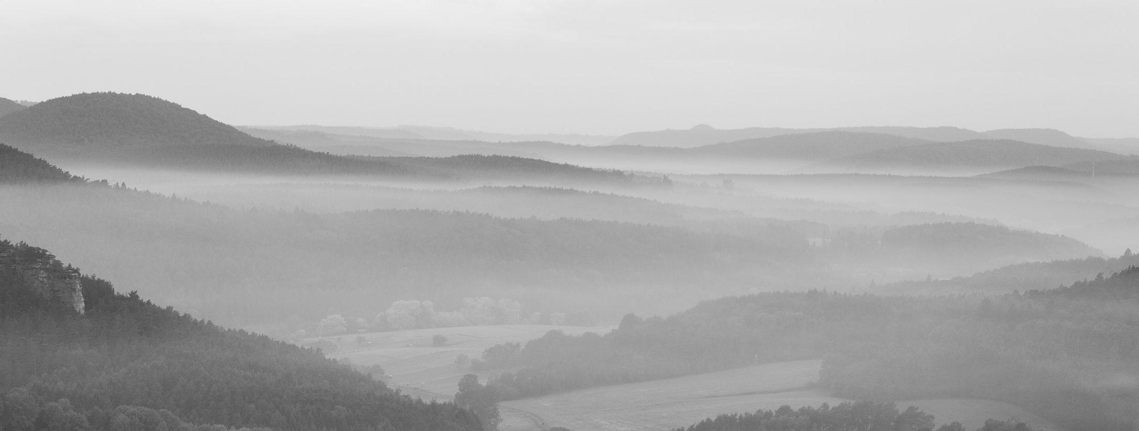 Pfälzer Wald, frühmorgens #2