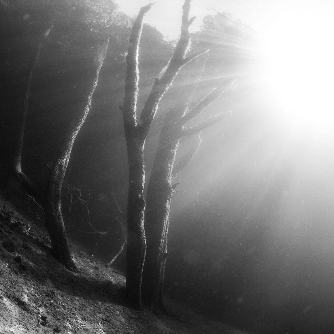 Im Wald, monochrom #2