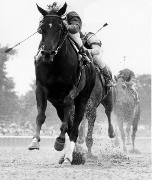 Ruffian, 1975 CCA Oaks winner/photo from jockeysite.com