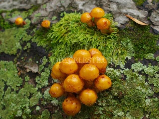 Honey Fungus?