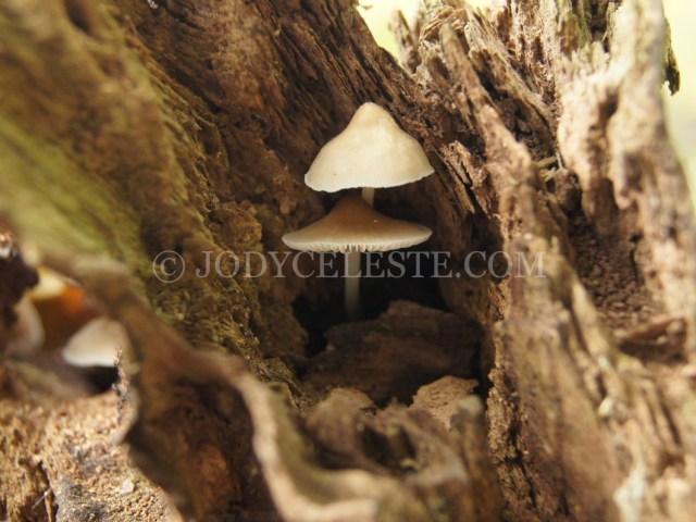 Fungus or Mushroom