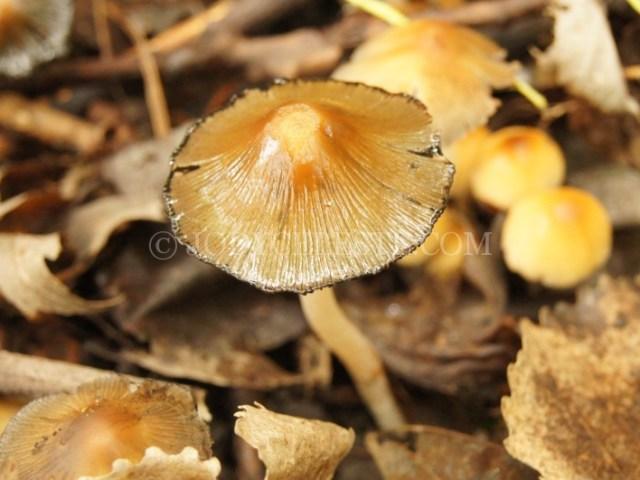 Mushroom or Fungus
