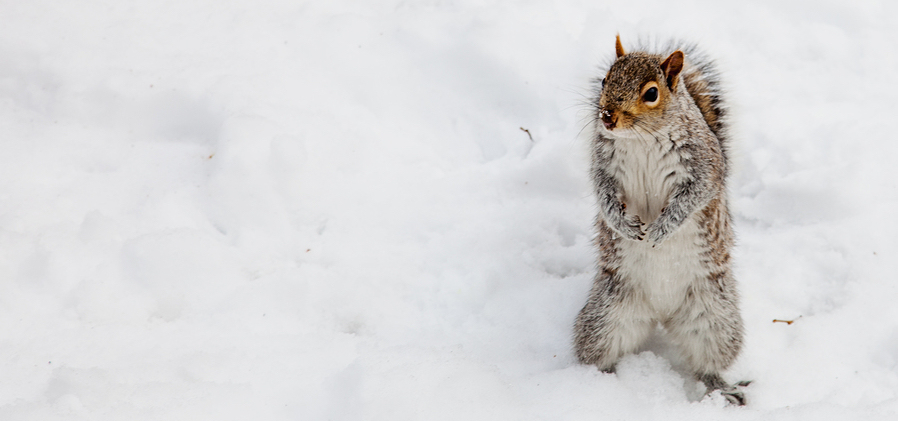 prevent winter pests chattanooga
