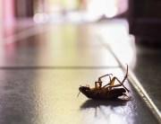 roaches chattanooga tn