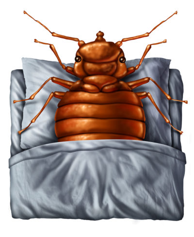7 Ways To Prevent Bed Bugs This Holiday Season Bed Bug Prevention