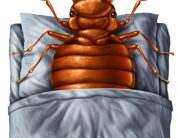 Link to blogpost: 7 Ways To Prevent Bed Bugs This Holiday Season