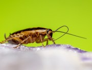 Link to blogpost: German Cockroaches: What You Should Know