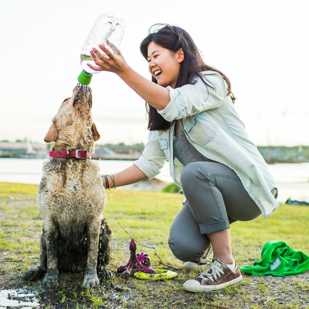 8 Products that make travel with your pet a breeze