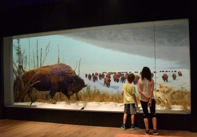 Ottawa children's museum of nature