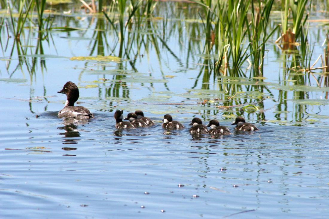 Calgary wetlands