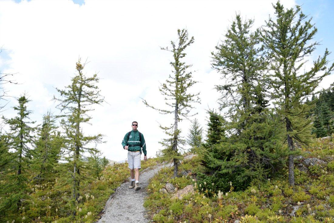 man hiking larches