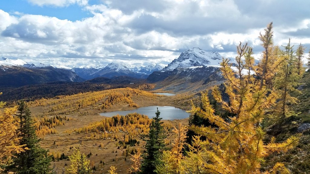 Want a larch hike? This is the best one in Banff