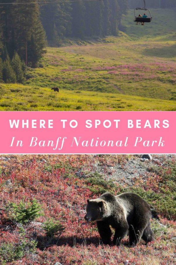 grizzly_bear_lake_louise