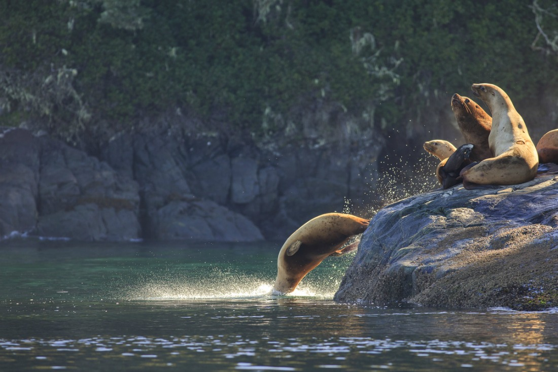 marine life vancouver island