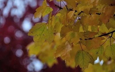Herfstkleuren in Berlijn
