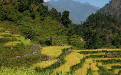 Rijstvelden in de buurt van Korsenadera, Manaslu Trekking, Nepal, 2006