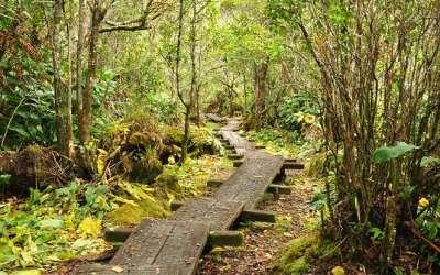 Alakai Swamp Trail, Kauai, Hawaii, 2011