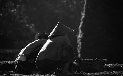 Myanmar, vrouwelijke hoveniers in de botanische tuine van Pyin Oo Lwin