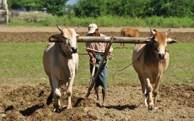 Myanmar, in de buurt van Hsinbyume Pagode