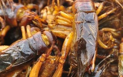 Myanmar, Inle Meer, gefrituurde insecten