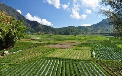 Agrarische activiteiten, Sembalun, Lombok, Indonesië, 2012