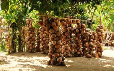 Opslag van kokosnoten, Lombok, Indonesië, 2012