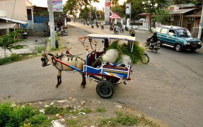 Paard en wagen, Lombok, Indonesië, 2012