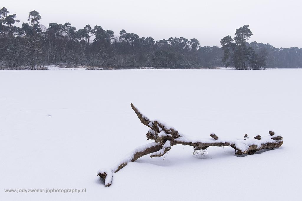 Nederlandse winterprikkels aan de Oisterwijkse vennen