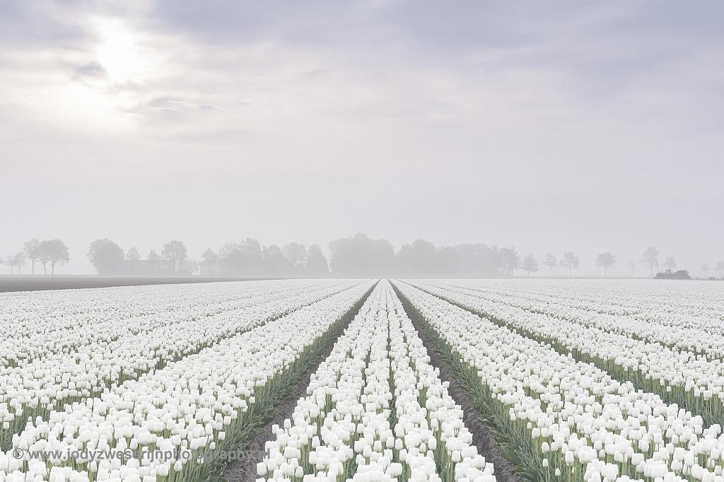 Tulpenvelden in de Noordoostpolder, 29-4-2018