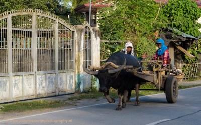 Landarbeiders, Luzon, Filipijnen, 13-11-2017