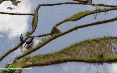 De rijstvelden van Banaue, Luzon, Filipijnen, 15-11-2017