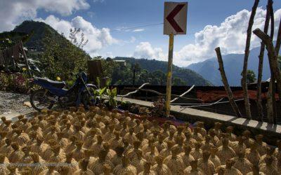 Drogende rijst, Banaue, Luzon, Filipijnen, 15-11-2017