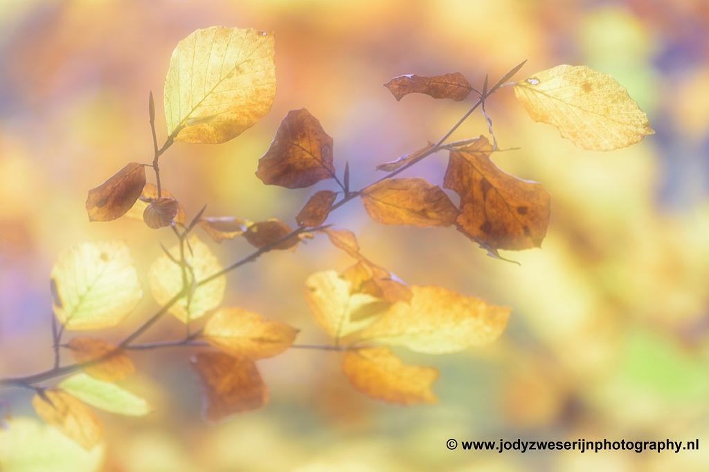 Herfstkleuren, Edmundsklamm, Hrensko, Tsjechië, 23-11-2018
