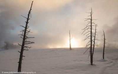Yellowstone, januari 2019