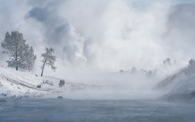 Yellowstone, januari 2019